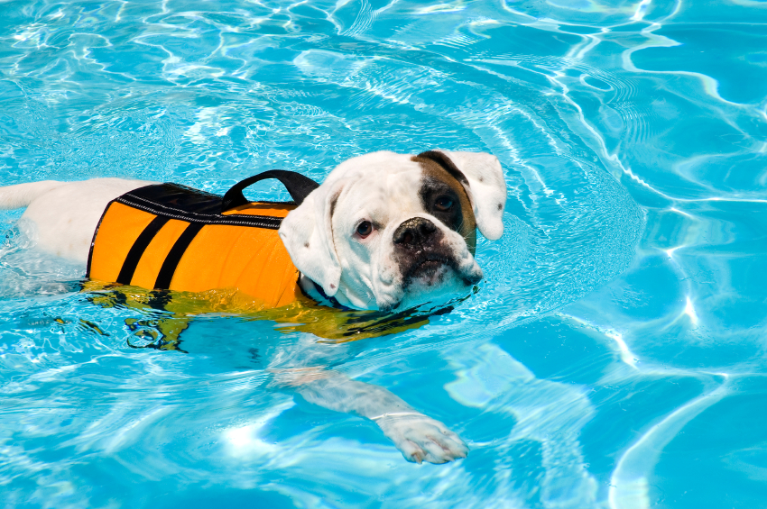 Splashing In The Pool Water Safety For Your Pets By Jenna B Riverview Animal Hospital