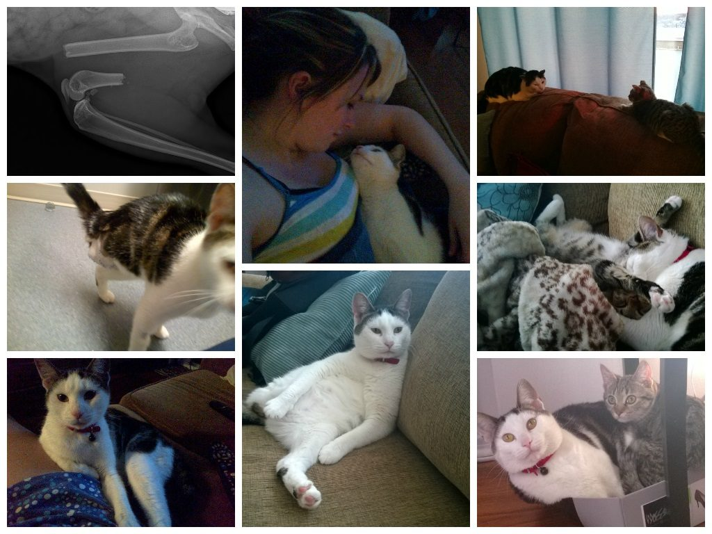 Photo collage of Selina the cat