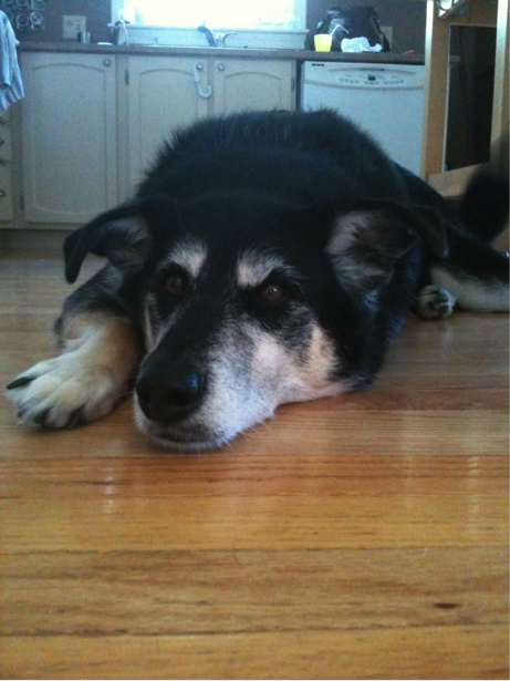 Cora the dog lying down