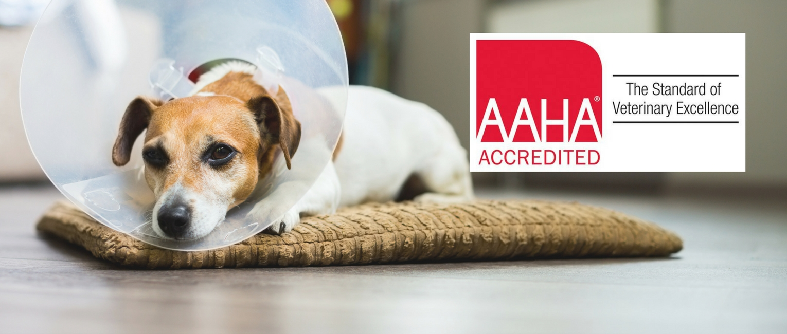 AAHA-ACCREDITED-HOSPITAL