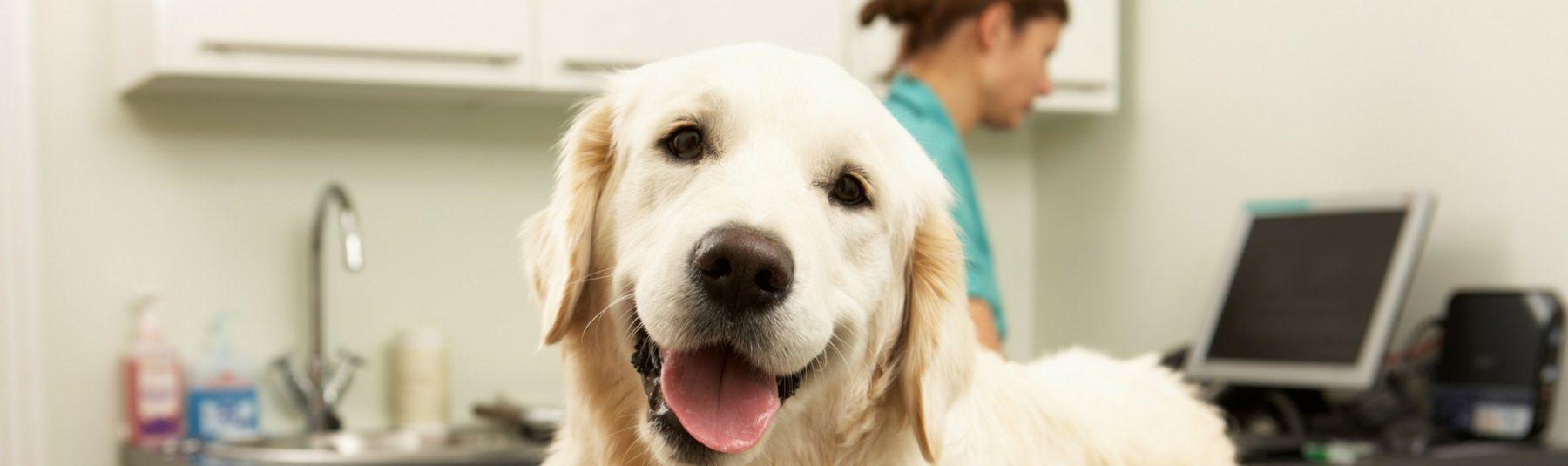 dog-clinic