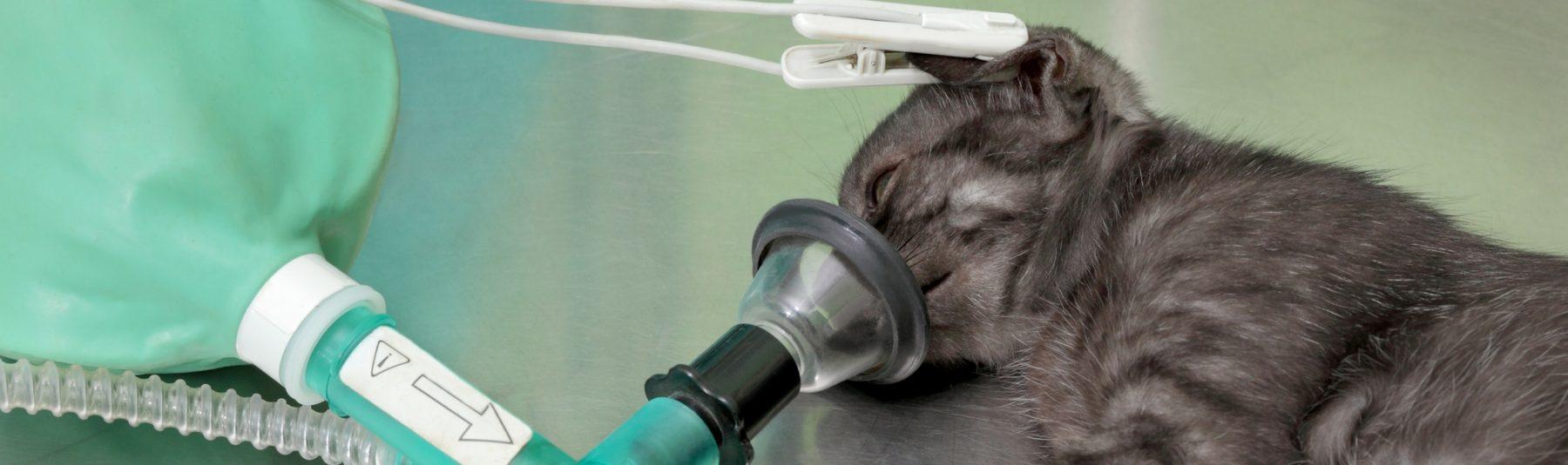 cat-surgery-service
