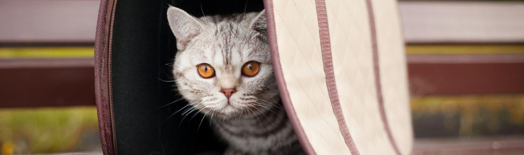 cat in cat house
