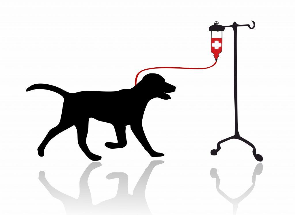 Chó có thể hiến máu không?
