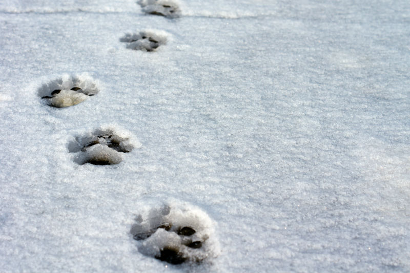 Dog paws in the snow