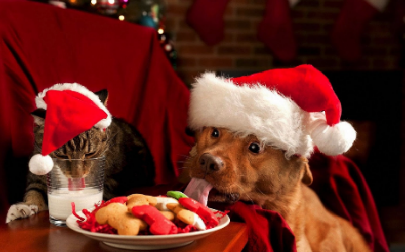 Cat and Dog ready for Xmas