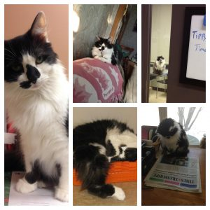 Photo collage of Tippy the cat