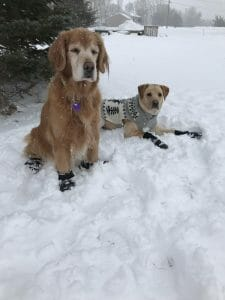 Bindi and Cooper the dogs lying in snow