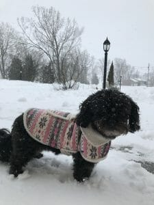 Mia the dog wearing a coat and standing in the snow