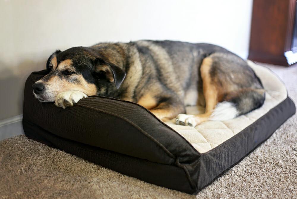 Dog lying on a dog bed