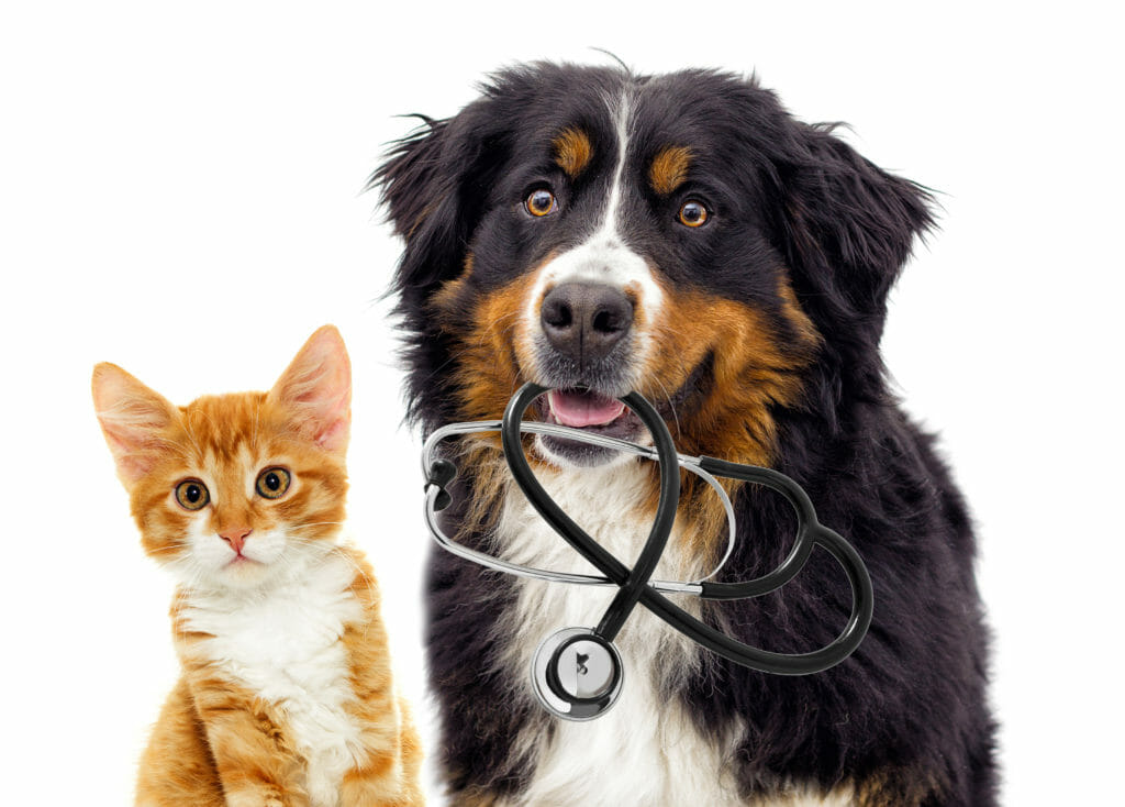 A cat and a dog holding a stethoscope in its mouth