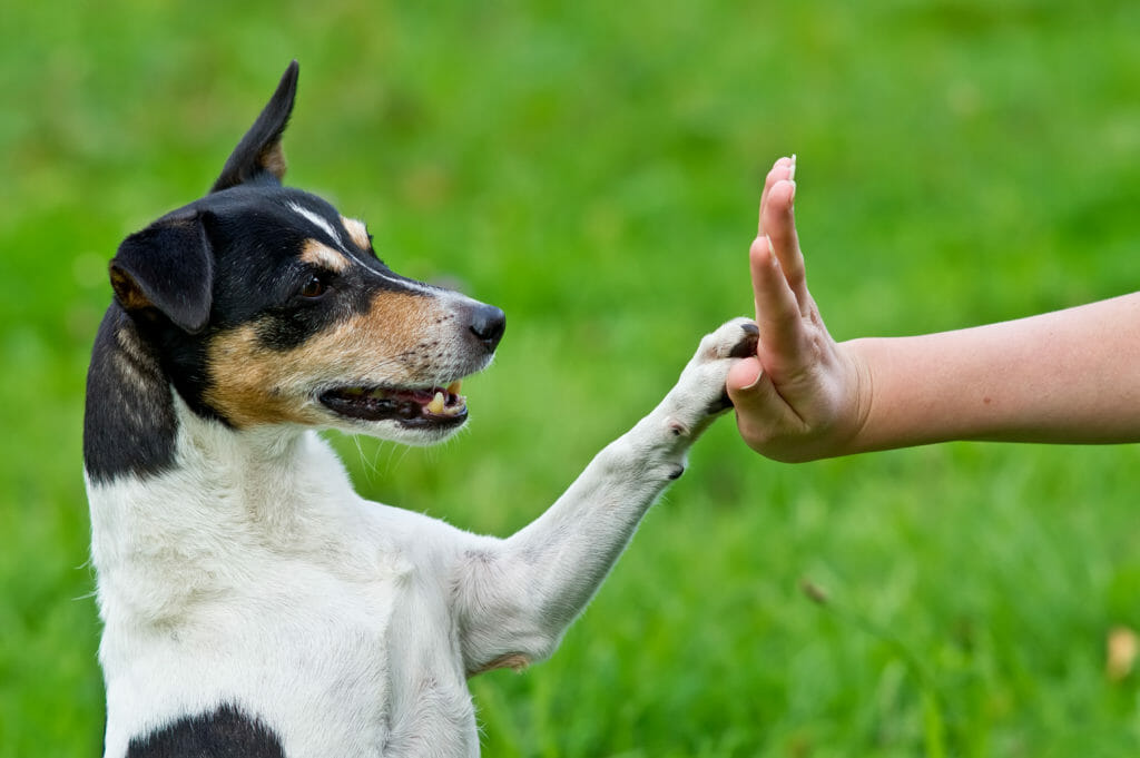 Dog high fiving the hand of a person